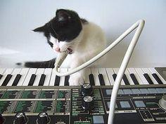 20060628_convoythecat_microkorg.jpg (Image JPEG, 400x300 pixels) #music #cats #korg #keyboard
