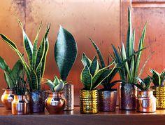 Modern Bathroom Decor with Live Plants - #bath, #interior, #decor, #plants, #greenery