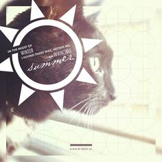 http://longhairandmustacheclub.tumblr.com/ #graphic design #album cover #cat #summer