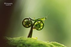 500px / Photo #photo #insects #bike #green