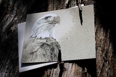 Snail's Pace Bald Eagle Illustration - Note Card #pace #eagle #snais #stationery #paper