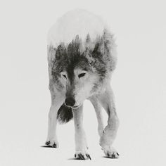 composite design, collage, wolf, illustration
