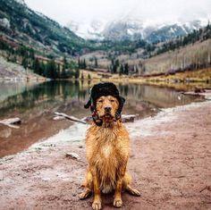 Everyone needs a travel companion 🐶