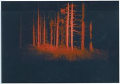 FFFFOUND! | Razz. #forest #red