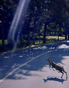 Chimes&Rhymes | innovative design and new techniques in visual artistry #google #deer #view #street