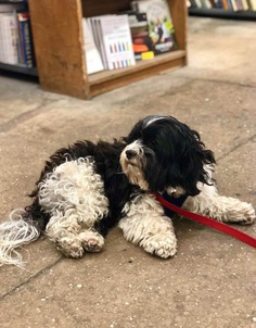 Most Dog Friendly Stores in America - Strand Bookstore