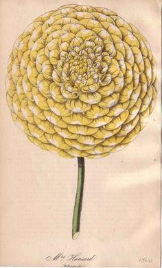 flower #illustration #flower