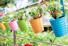 Colorful Flowerpots