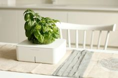 Click and Grow is an automatic plant growing system which can grow plants without watering and fertilizing. #product #kitchen #design #home