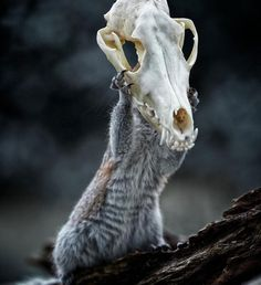 Squirrel Warhol by Max Ellis