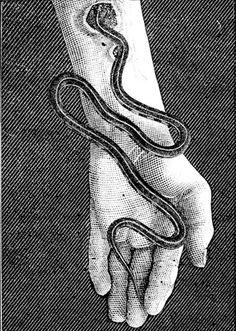 //snakess #woodcut #illustration #art