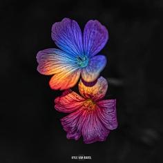 Beautiful Macro Flowers Pictures by Kyle van Bavel