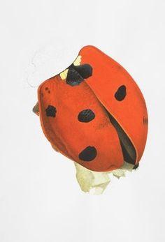 Cornelia Hesse-Honegger #cornelia #bug #insect #honegger #nuclear #hesse