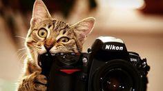 Cat With Nikon