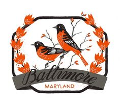 Baltimore - The Everywhere Project #alyssa #been #everywhere #birds #illustration #maryland #baltimore #nassner