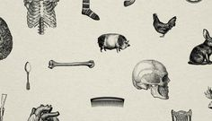 Michaels Guide To Life, Michael Pharaoh #illustration #skull #pig #bones #comb