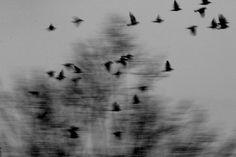 Migration, Artwork by Lucie Souslapluie