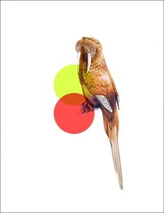 Odd Animals : - tor weeks - director of art #animals #minimal #modern
