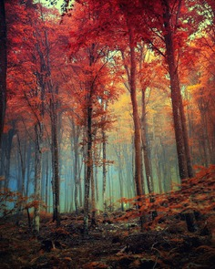 Magical Landscape and Nature Photography by Jan Poloni