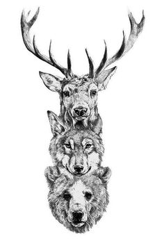 observando #antlers #deer #white #stack #faces #black #illustration #nature #wolf #and #bear #animal