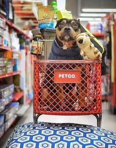 Most Dog Friendly Stores in America - Petco