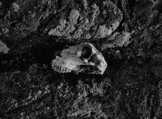 Pale Grain #sweden #nordic #photography #skull #death #life
