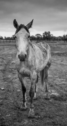 Jake #field #white #horse #black #photography #and #animal #beauty
