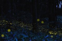 Glowing Trails of Light: Light Painting With Fireflies | Jeannie Huang #landscape #light #painting