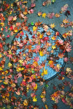 http://off-the-wall-b.tumblr.com/ #autumn #leaves