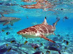 SUN BELIEVABLE #shark