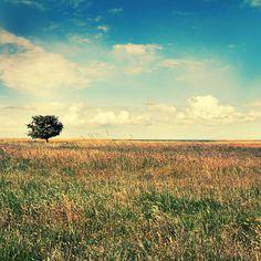 Sweet Summer by ZanaSoul