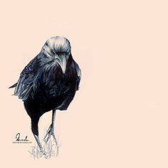 Ballpoint Pen Crow by =kleinmeli on deviantART #crow