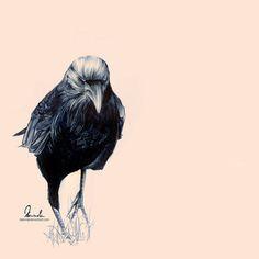Ballpoint Pen Crow by =kleinmeli on deviantART