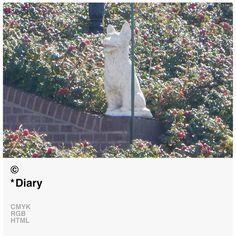 *Diary © [ catrin mackowski ]