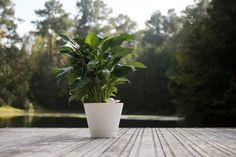 The NIMBUS is an #automatic #plant #watering system that feels like you've hired an expert to water your precious plants for several month