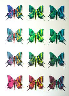 ministry-of-love---butterfly-bazaar #butterfly #screen #print