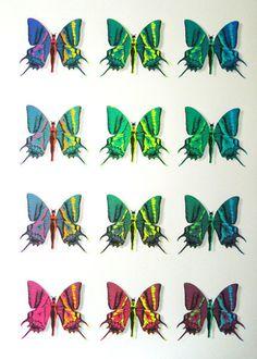 ministry-of-love---butterfly-bazaar
