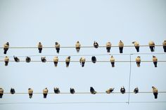 IG082 #a #in #row #birds #on #wire #sitting