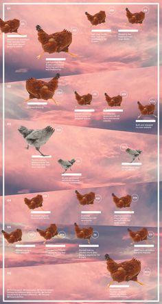 #infographics #studioregina