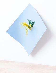 Martina Lang | PICDIT
