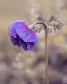 #splendid_flowers: Fantastic Flowers Photography by Elena Shavlovska