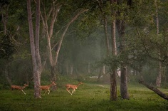 Wildlife Action Photography by Varun Aditya