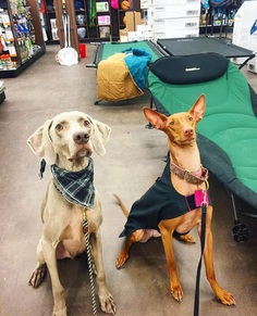 Most Dog Friendly Stores in America - Gander Outdoors