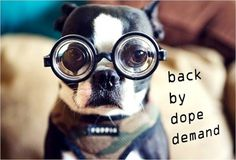 Wall-B World Wild #glasses #dog