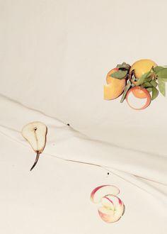 fruit study on canvas (IV), 2013 adamkremer