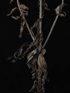 Charlie Drevstam — Winter Garden #flower #drevstam #photography #charlie