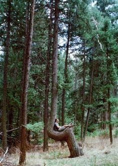 tree-1-600x847.jpg (530×748)