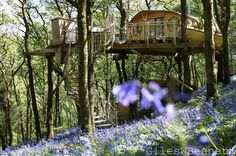 Treehouse In Wales, Uk (architect Peter Canham)