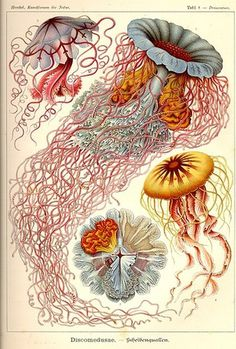 All sizes | Vintage octopus illustration | Flickr - Photo Sharing! #illustration #sea
