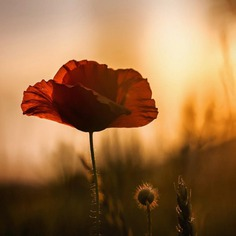 Beautiful Macro Flower Photography by Silvia Kobelova